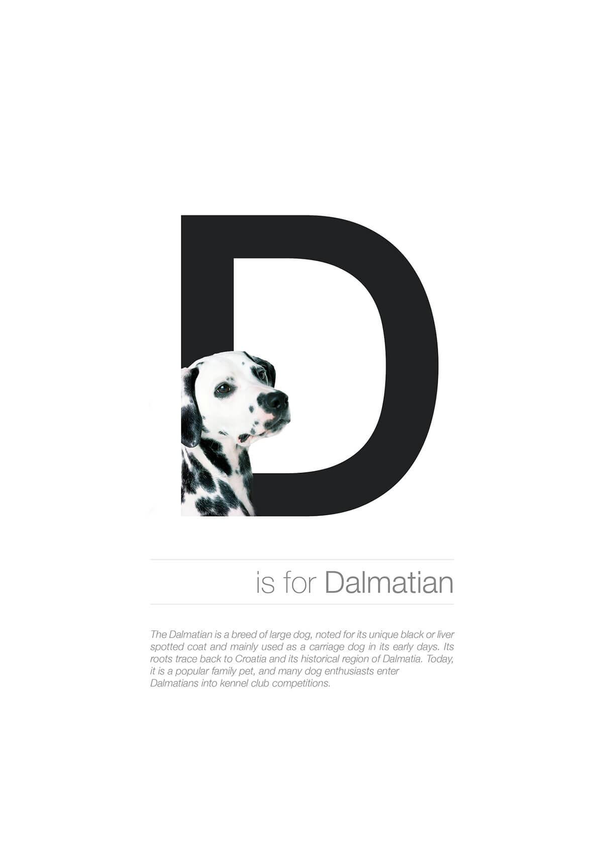 D ตัวอักษรกราฟฟิค A Z สายพันธุ์หมาไอเดียน่ารักจากดีไซน์เนอร์โรมาเนีย