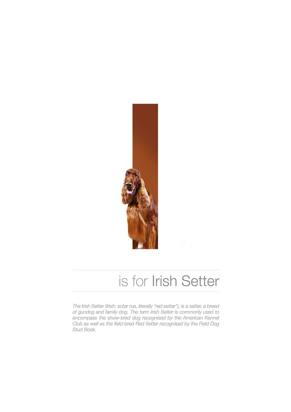 I ตัวอักษรกราฟฟิค A Z สายพันธุ์หมาไอเดียน่ารักจากดีไซน์เนอร์โรมาเนีย