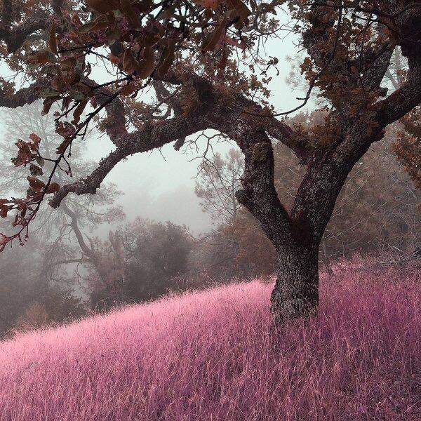 ภาพศิลปชวนฝันเหล่านี้ถ่ายด้วยiPhone กับแอปตัดต่อ ธรรมดาๆ..น่าทึ่งมากๆ 19 - fairy tale