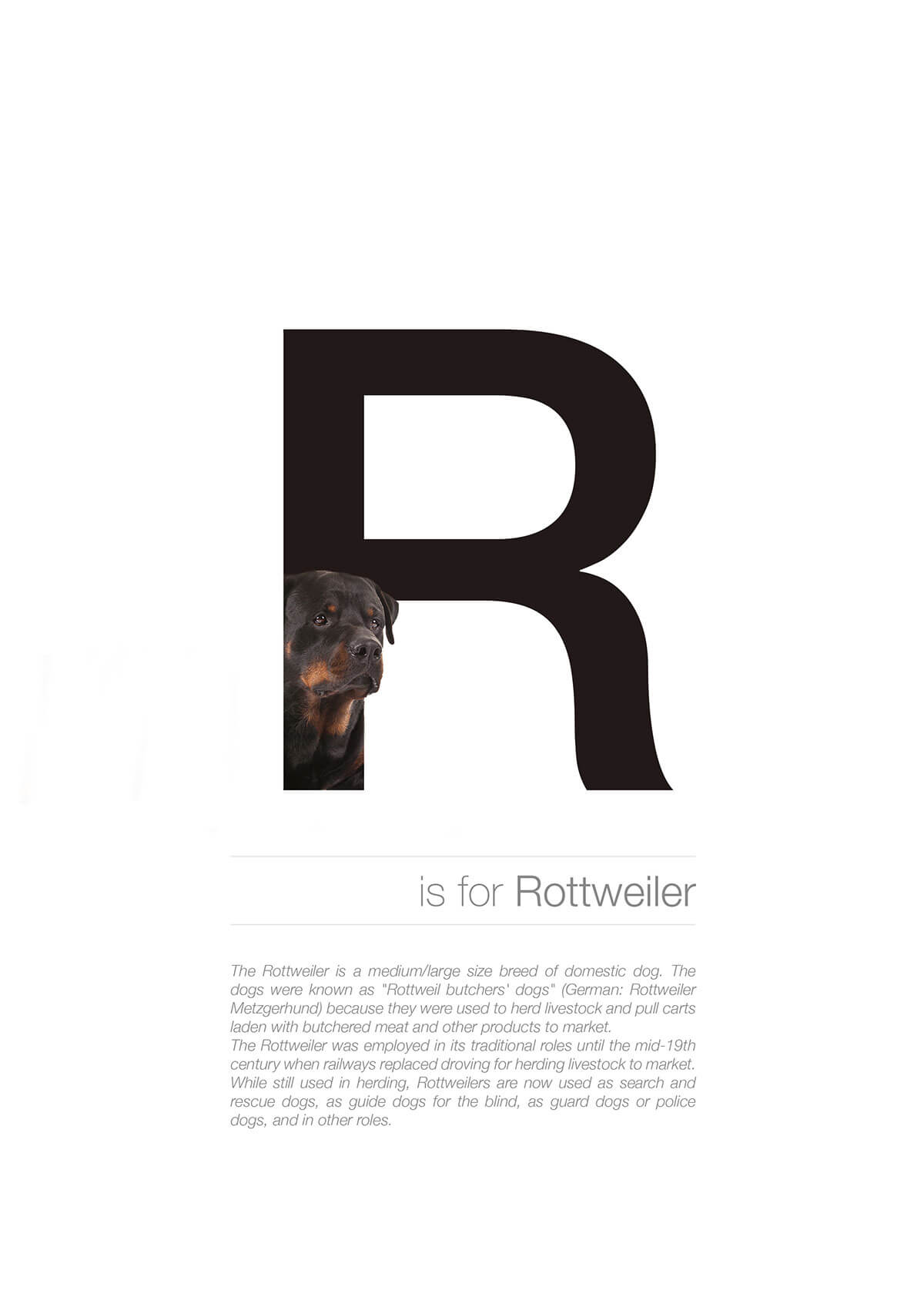 R ตัวอักษรกราฟฟิค A Z สายพันธุ์หมาไอเดียน่ารักจากดีไซน์เนอร์โรมาเนีย