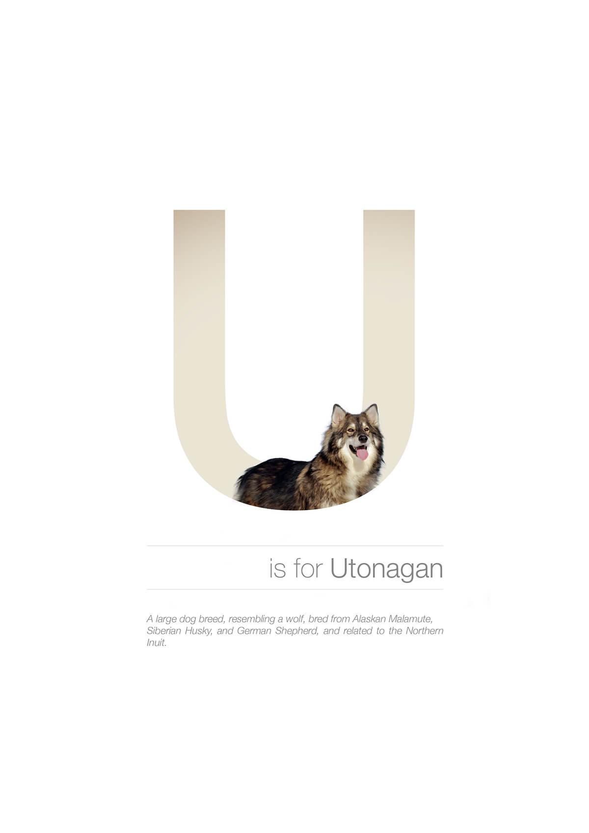 U ตัวอักษรกราฟฟิค A Z สายพันธุ์หมาไอเดียน่ารักจากดีไซน์เนอร์โรมาเนีย