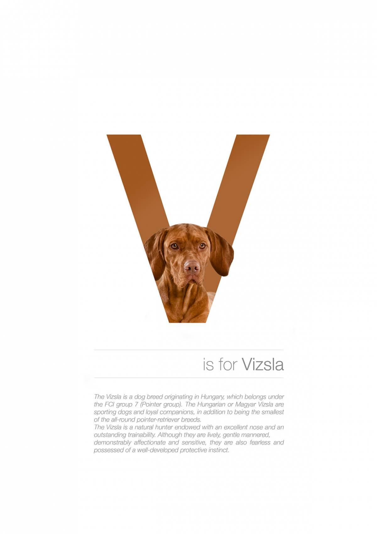 V ตัวอักษรกราฟฟิค A Z สายพันธุ์หมาไอเดียน่ารักจากดีไซน์เนอร์โรมาเนีย
