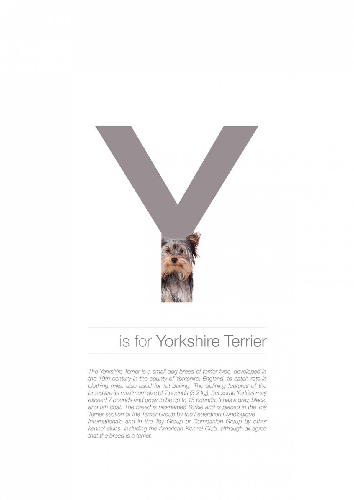 Y ตัวอักษรกราฟฟิค A Z สายพันธุ์หมาไอเดียน่ารักจากดีไซน์เนอร์โรมาเนีย