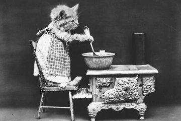 ภาพโบราณ100ปี..หมาแมวแต่งตัวย้อนยุค ..คนถ่ายช่างอินเทรนจริงๆ 4 - pet