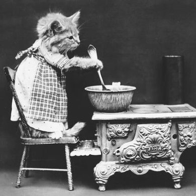 ภาพโบราณ100ปี..หมาแมวแต่งตัวย้อนยุค ..คนถ่ายช่างอินเทรนจริงๆ 14 - pet