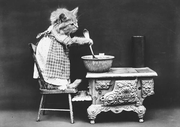 ภาพโบราณ100ปี..หมาแมวแต่งตัวย้อนยุค ..คนถ่ายช่างอินเทรนจริงๆ 17 - หมา