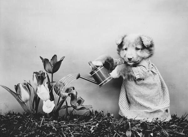 ภาพโบราณ100ปี..หมาแมวแต่งตัวย้อนยุค ..คนถ่ายช่างอินเทรนจริงๆ 21 - pet