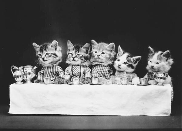 ภาพโบราณ100ปี..หมาแมวแต่งตัวย้อนยุค ..คนถ่ายช่างอินเทรนจริงๆ 26 - pet