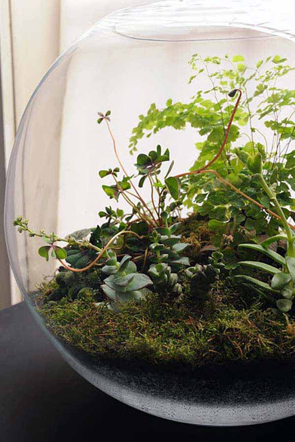 Mini-Indoor-Gardening-13