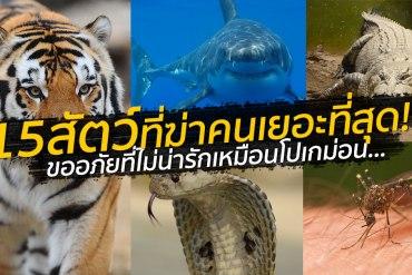 สัตว์อะไรฆ่าคนตายเยอะสุดในโลก? ลองทายก่อนเปิดโพสต์นี้ 13 - animals