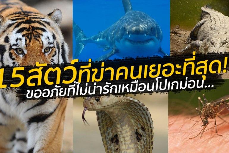 สัตว์อะไรฆ่าคนตายเยอะสุดในโลก? ลองทายก่อนเปิดโพสต์นี้ 19 - Premium
