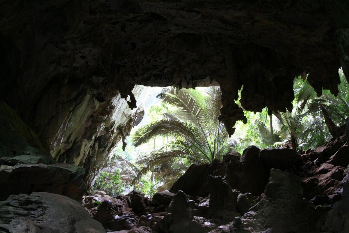 ตาด 3 หุบป่าตาด ป่าดึกดำบรรพ์ในอุทัยธานีที่ค้นพบสิ่งมีชีวิตชนิดใหม่ของโลก