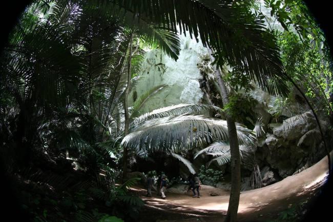 ป่าตาด 1 750x500 หุบป่าตาด ป่าดึกดำบรรพ์ในอุทัยธานีที่ค้นพบสิ่งมีชีวิตชนิดใหม่ของโลก