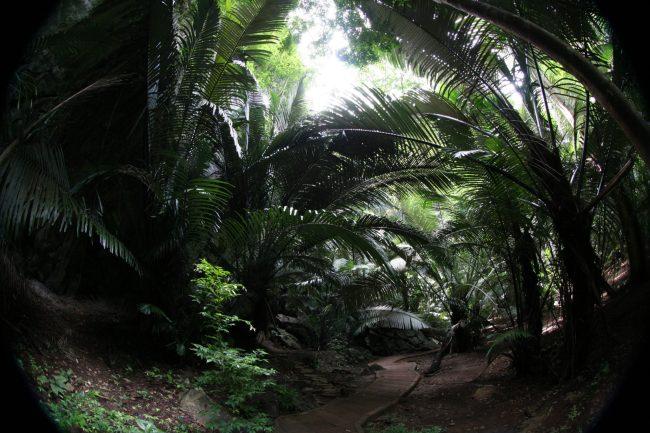 IMG 0197 750x500 หุบป่าตาด ป่าดึกดำบรรพ์ในอุทัยธานีที่ค้นพบสิ่งมีชีวิตชนิดใหม่ของโลก