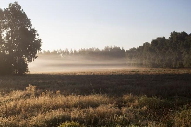 fog 750x500 วัฏจักรของน้ำใน หน้าหนาว เมฆ หมอก น้ำค้าง หรือ แม่คะนิ้ง เกิดจากอะไร?
