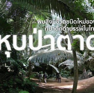 หุบป่าตาด ป่าดึกดำบรรพ์ในอุทัยธานีที่ค้นพบสิ่งมีชีวิตชนิดใหม่ของโลก