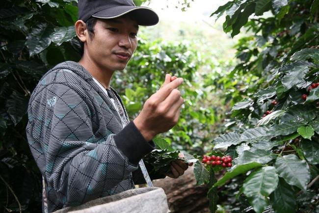 smartfarmer 08 750x500 ทำความรู้จักการเกษตรยุค 4.0 คืออะไร? และพบตัวอย่างเกษตรกรรุ่นใหม่ คุณอายุ จือปา จากเด็กดอยสู่เจ้าของแบรนด์กาแฟระดับโลก