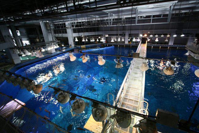 IMG 2368 750x500 พิพิธภัณฑ์สัตว์ทะเล ชูราอิมิ (Churaumi Aquaium) แห่งโอกินาวา (Okinawa)