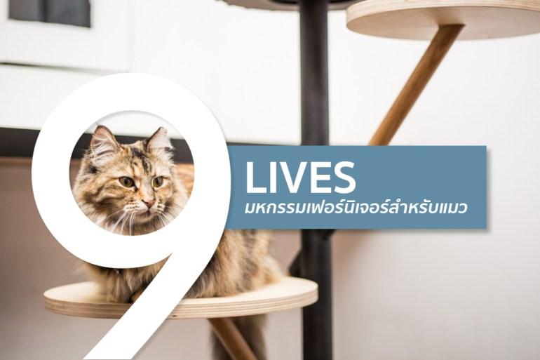 ทาสแมวต้องร้องว้าว งานแสดงเฟอร์นิเจอร์สำหรับแมวโดยเฉพาะ 28 - DESIGN