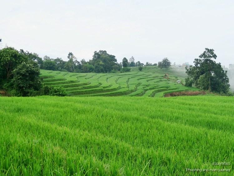 papongpieng5 750x563 เสพวิวหลักล้านที่บ้านป่าบงเปียง สุดยอดนาขั้นบันไดของเมืองไทย