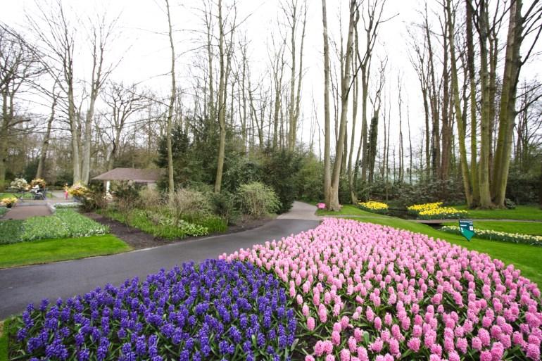สวนเคอเคนฮอฟ (Keukenhof) เนเธอร์แลนด์ สวนดอกไม้หลายล้านดอก ที่ใหญ่ที่สุดในโลก 29 - ทิวลิป