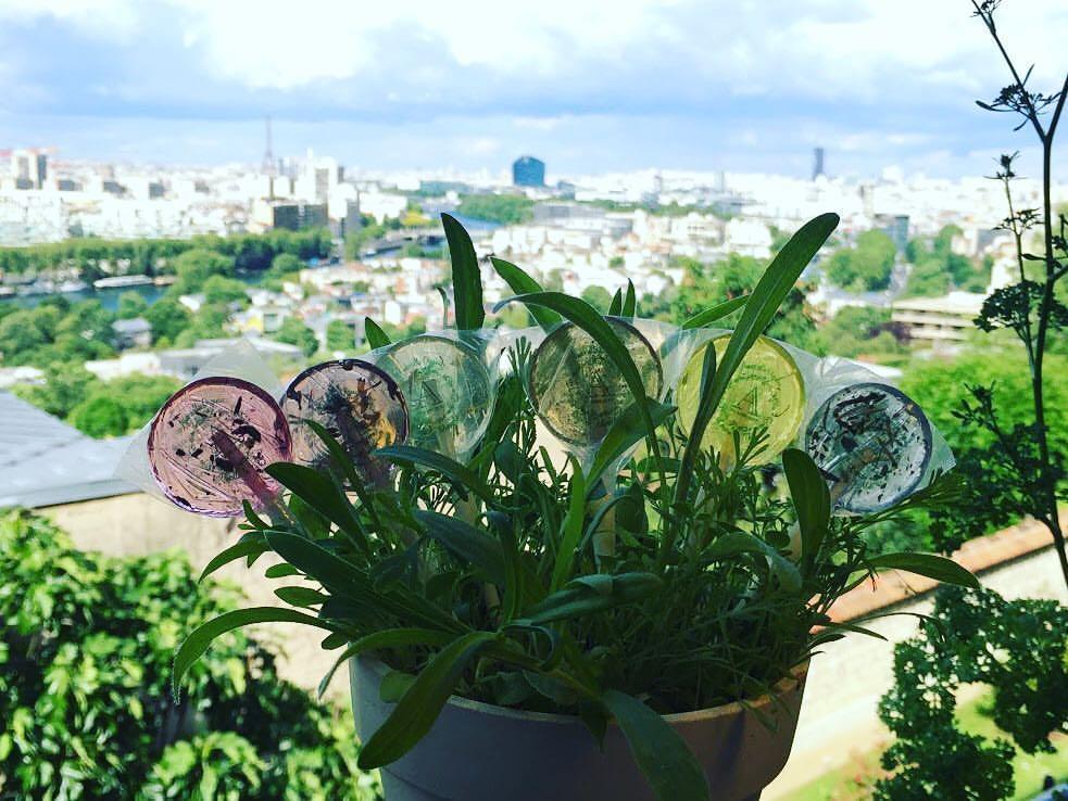 %name Amborella Organics อมยิ้มห่วงใยโลก สีหวาน ปลูกได้ เบ่งบานเป็นต้นสมุนไพร