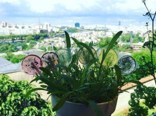 Amborella Organics5