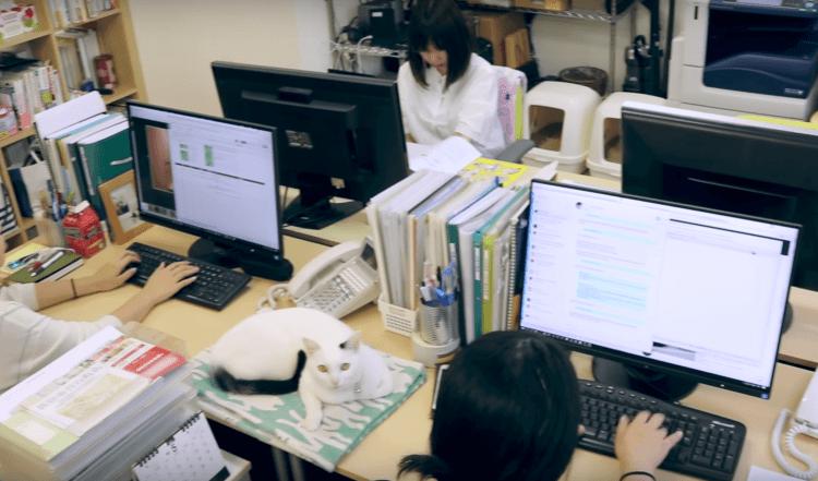 catoffice6 750x441 'Cats Therapy' เครียดนัก ไปพักเลี้ยงแมว! บริษัทญี่ปุ่นยินดีให้พนักงานพาแมวมาเลี้ยงในออฟฟิศ เผื่อผ่อนคลายความเครียด