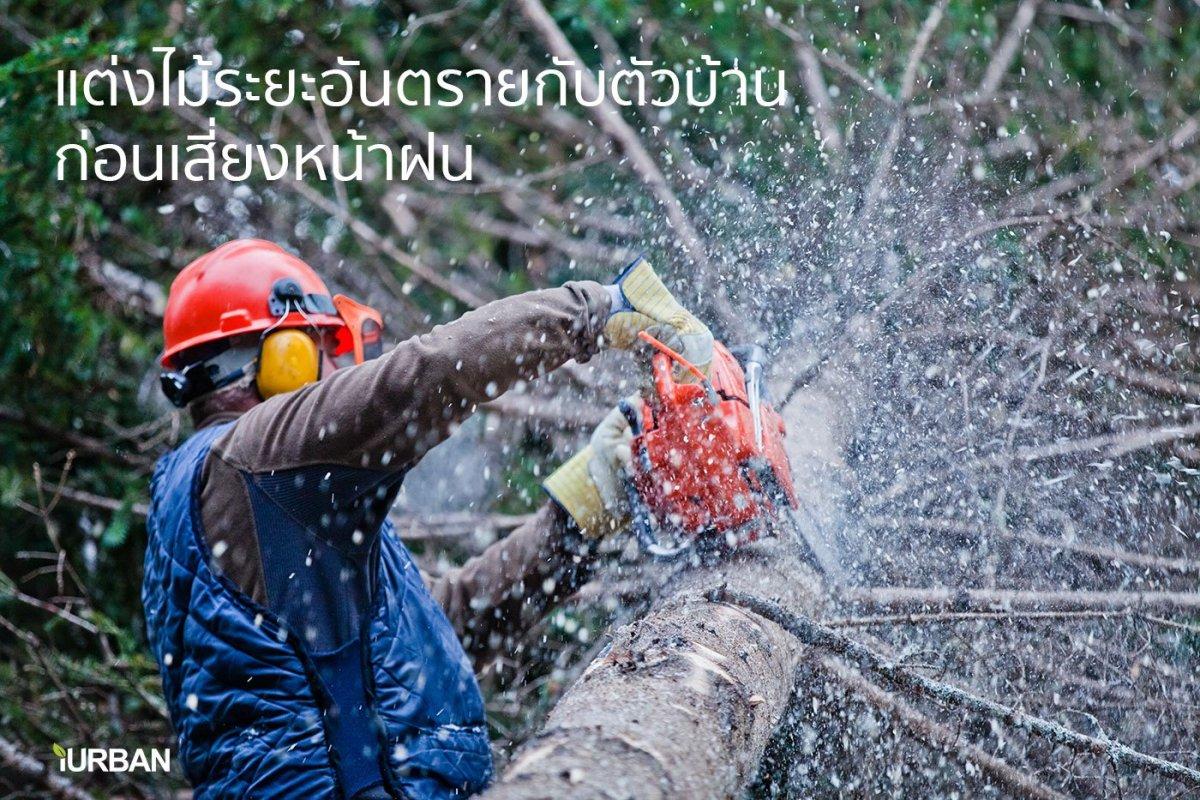 cutthetree ของแต่งบ้านรับหน้าฝนแบบ Perfect Lifestyle พร้อมโค้ดลดราคาที่ HomePro.co.th
