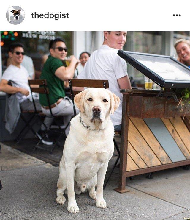 thedogist1 10 Instagram Accounts ไอจีคอนเทนต์ดี๊ดี ที่ควรค่าแก่การฟอลโล่!!