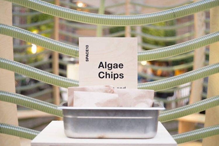 IKEA Space10 โชว์วิจัยแหล่งอาหารใหม่เพื่อโลกอนาคต 20 - IKEA (อิเกีย)