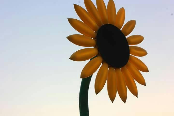 ประกวดภาพถ่าย ประติมากรรมแสงดอกทานตะวัน 13 -
