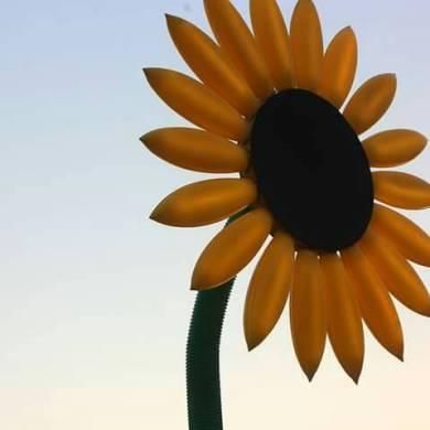 ประกวดภาพถ่าย ประติมากรรมแสงดอกทานตะวัน 14 -