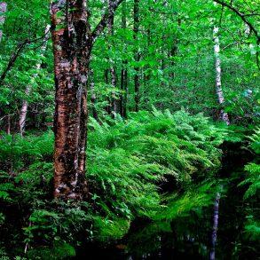 สายเดินป่าต้องรู้! 5 กิจกรรมเดินป่าอย่างไร ไม่รบกวนธรรมชาติ 14 - Environment