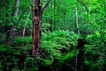 สายเดินป่าต้องรู้! 5 กิจกรรมเดินป่าอย่างไร ไม่รบกวนธรรมชาติ
