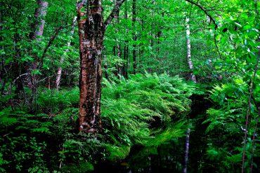 สายเดินป่าต้องรู้! 5 กิจกรรมเดินป่าอย่างไร ไม่รบกวนธรรมชาติ 8 - computer desk