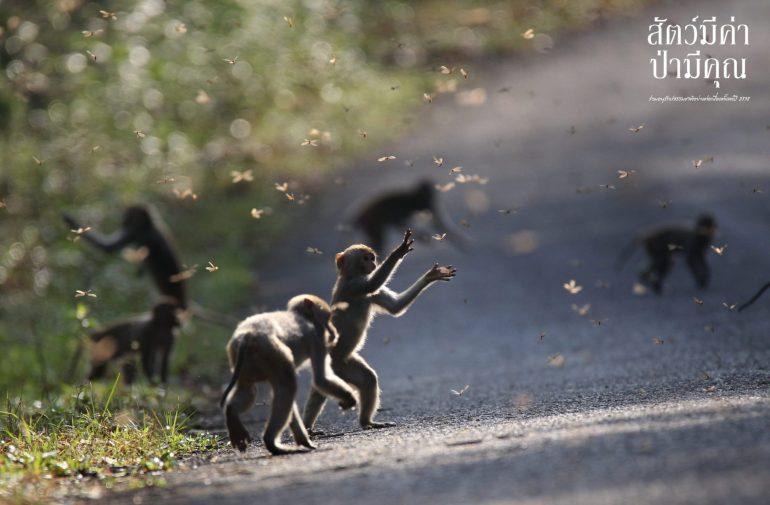 กรมอุทยานแห่งชาติฯ และเครือซีพี ขอเชิญชม นิทรรศการภาพถ่าย 'สัตว์มีค่า ป่ามีคุณ' ประจำปี 2561 13 -