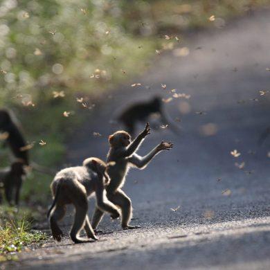 กรมอุทยานแห่งชาติฯ และเครือซีพี ขอเชิญชม นิทรรศการภาพถ่าย 'สัตว์มีค่า ป่ามีคุณ' ประจำปี 2561 15 -