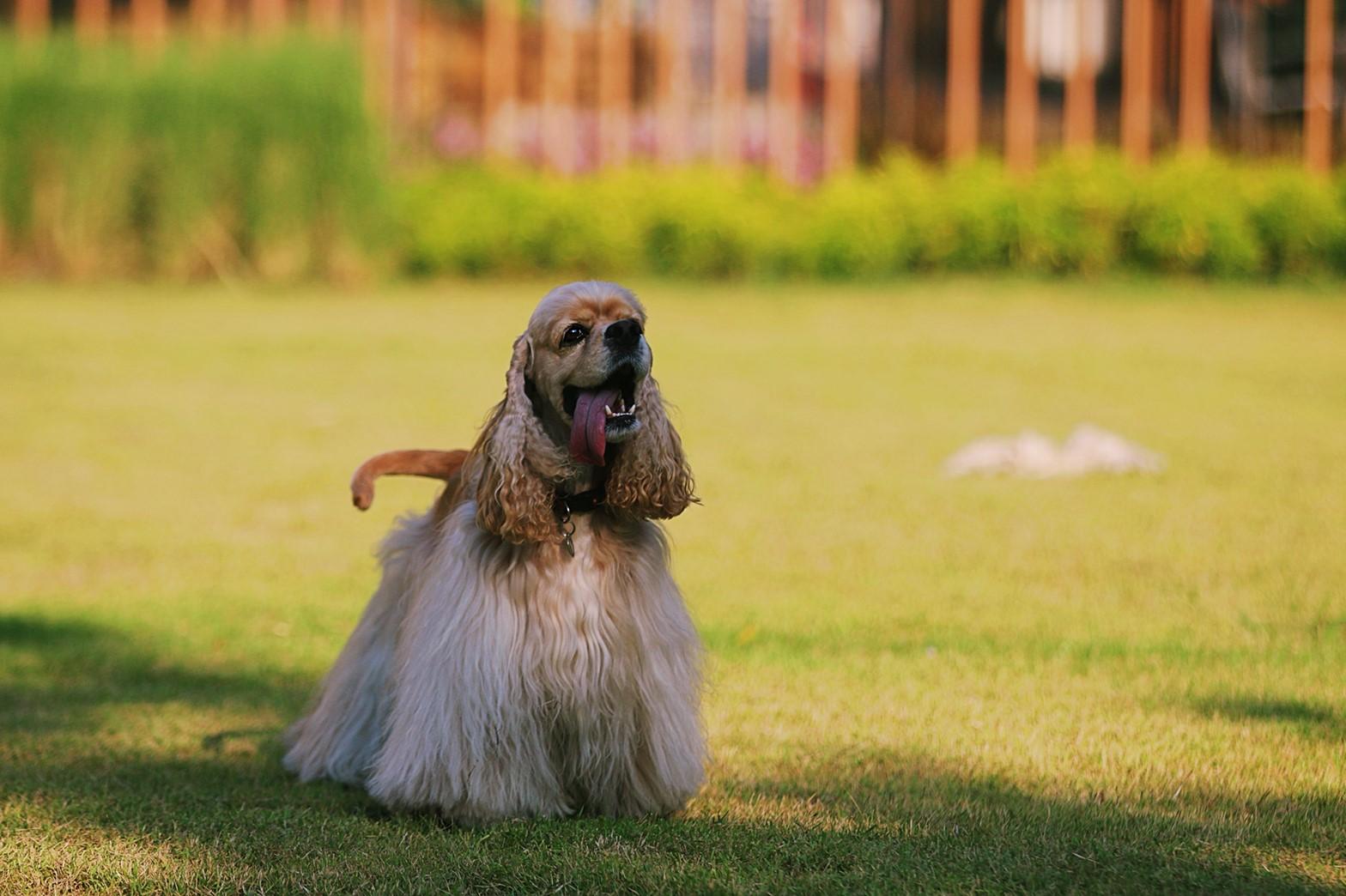 TRAIL and TAIL Pet-Friendly Community แหล่งแฮงค์เอ้าท์ใหม่ของคนเมือง พร้อมเติมความสุขให้สัตว์เลี้ยงแสนรักได้ทุกวัน 18 -