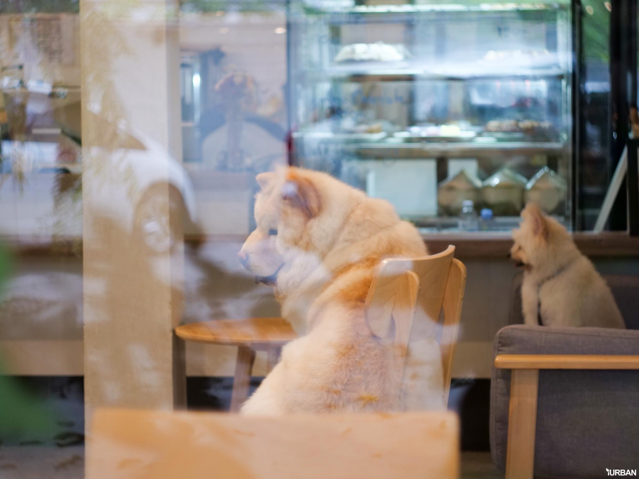The Running Dog Cafe ร้านกาแฟ #หมาเข้าได้ สไตล์สถาปนิก ย่านสาทร 33 - cafe