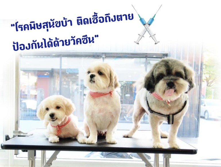 28 ก.ย. วันป้องกันโรคพิษสุนัขบ้าโลก 2019 13 -