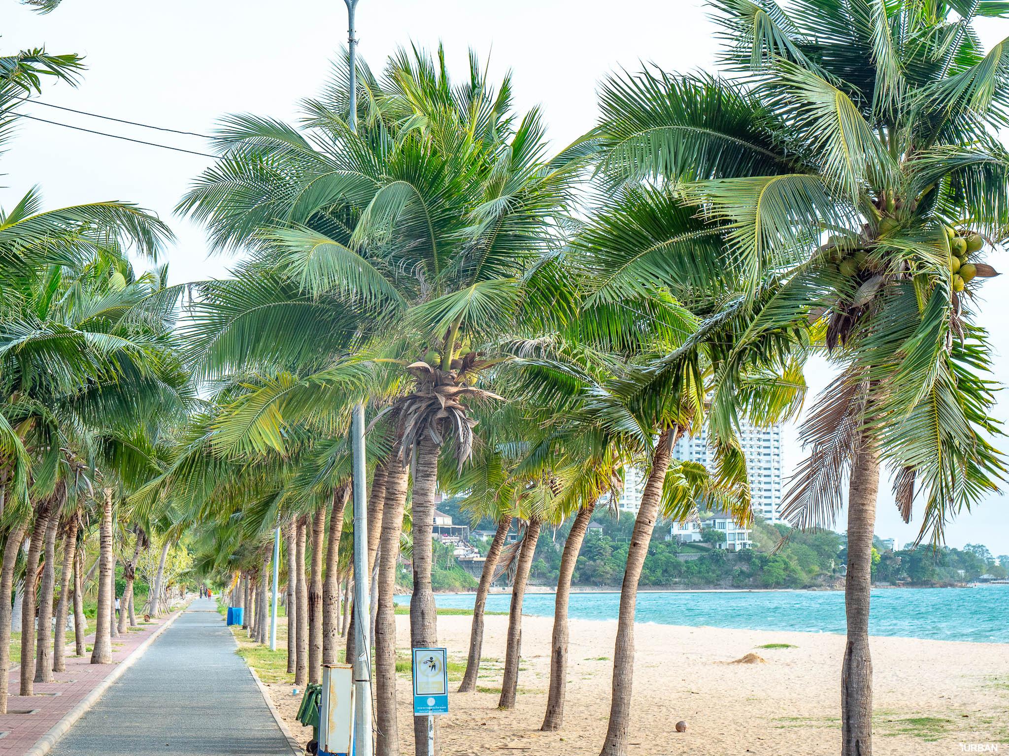 7 ชายหาดทะเลพัทยา ที่ยังสวยสะอาดน่าเที่ยวใกล้กรุงเทพ ไม่ต้องหนีร้อนไปไกล ก็พักได้ ชิลๆ 116 - Beach