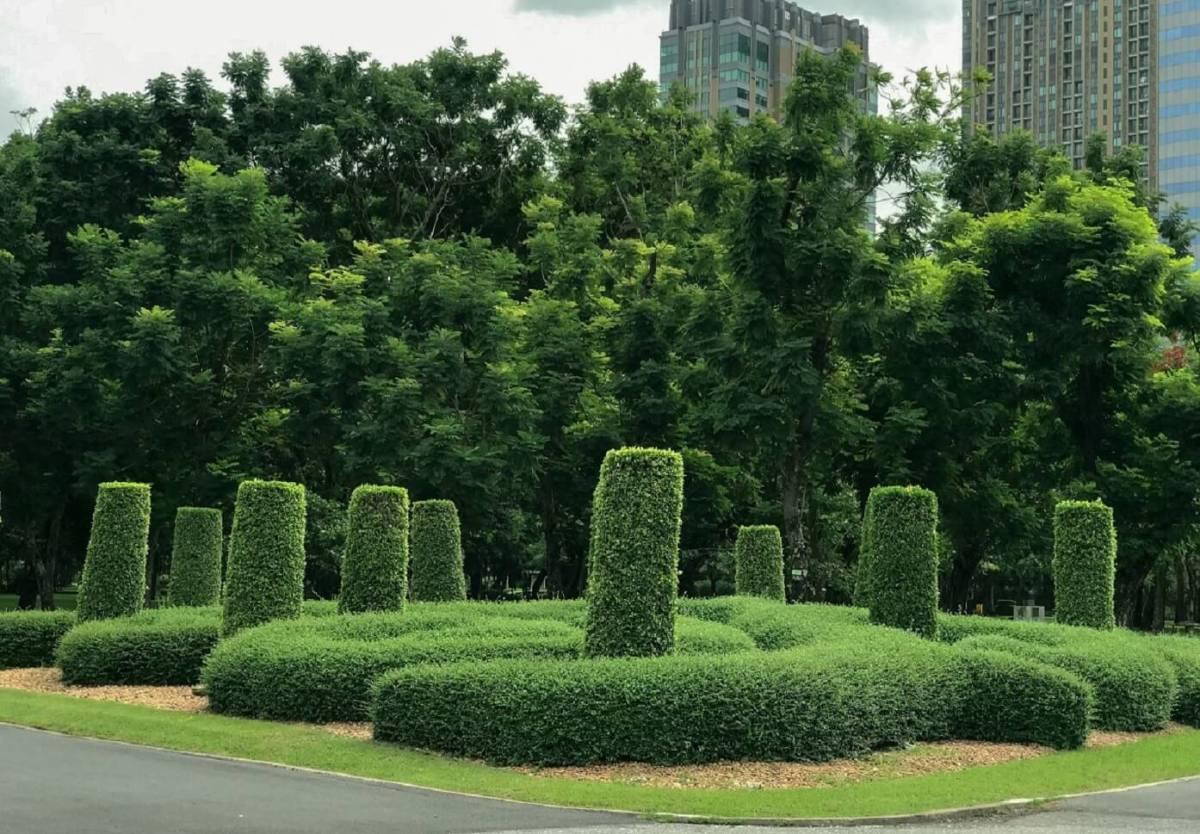 CHECK-IN...10 พิกัดแชะ @3 สวนสวยกลางเมือง ที่สายวิ่ง TMB | ING PARKRUN 2019 ไม่ควรพลาด! 26 -