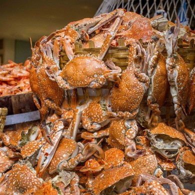 Crab'n Crew บุฟเฟ่ต์ปูไม่อั้น ที่ร้านอาหารเดอะแสควร์ โรงแรมโนโวเทล กรุงเทพ สีลม 13 -