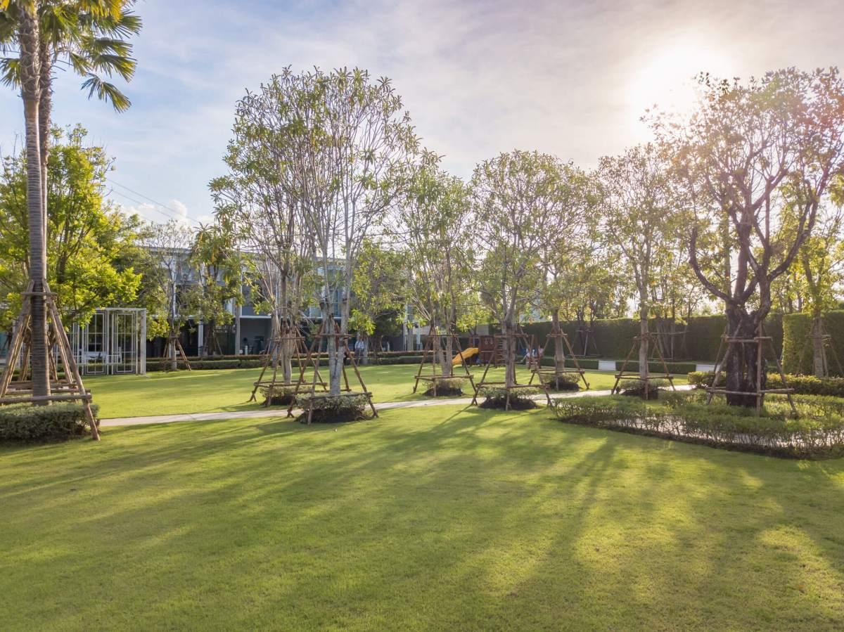 รีวิวทาวน์โฮม Pleno ปิ่นเกล้า - จรัญฯ การออกแบบที่ดีมากทั้งในบ้านและส่วนกลางที่ให้เกินราคา 28 - AP (Thailand) - เอพี (ไทยแลนด์)