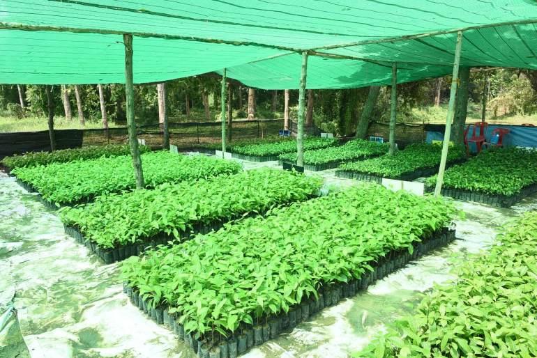The Forestias by MQDC ทุ่มงบ 25 ล้าน เปิดโครงการ 'Forest for Life สร้างป่าสร้างชีวิต' มอบเงินช่วยผู้ประสบปัญหาโควิดครอบครัวละ 15,000 บาท เพื่อให้ช่วยดูแลกล้าไม้ 1.2 ล้านต้น ในระยะเวลา 3 เดือน 15 -
