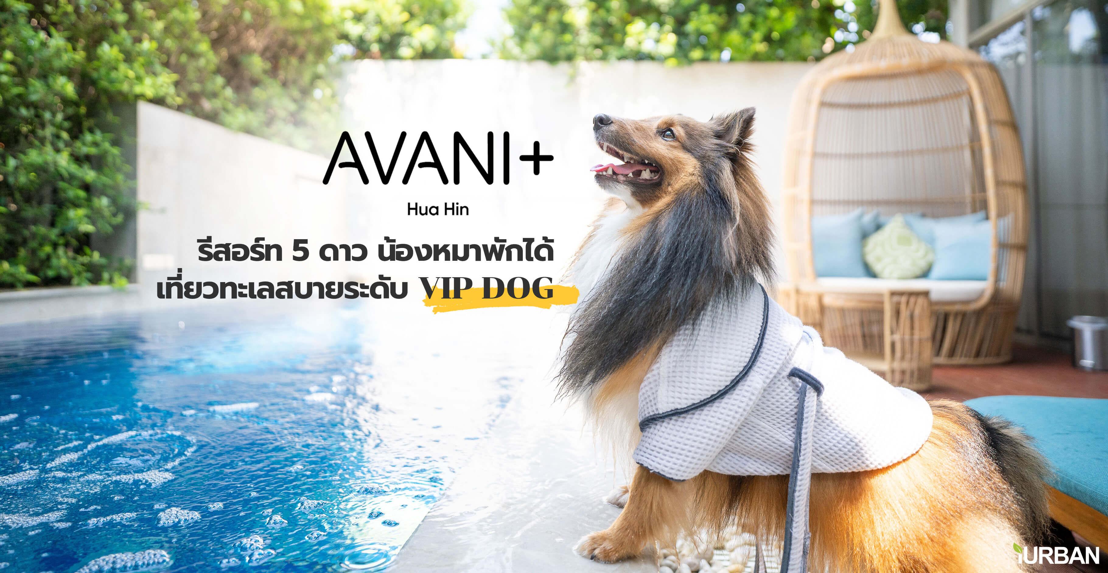 รีวิว Avani+ Hua Hin Resort พูลวิลล่าส่วนตัวสุดหรู หนึ่งในรีสอร์ทสุนัขพักได้ที่ดีที่สุดในไทยจากเชนจ์ Minor 13 - Avani