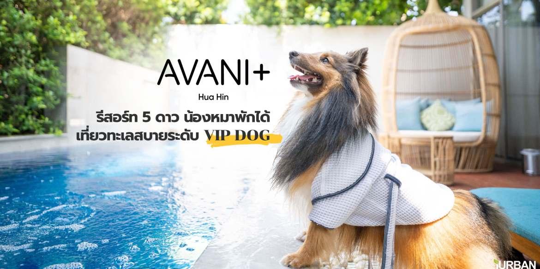 รีวิว Avani+ Hua Hin Resort พูลวิลล่าส่วนตัวสุดหรู หนึ่งในรีสอร์ทสุนัขพักได้ที่ดีที่สุดในไทยจากเชนจ์ Minor 14 - Avani