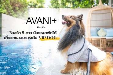 รีวิว Avani+ Hua Hin Resort พูลวิลล่าส่วนตัวสุดหรู หนึ่งในรีสอร์ทสุนัขพักได้ที่ดีที่สุดในไทยจากเชนจ์ Minor 13 - TRAVEL