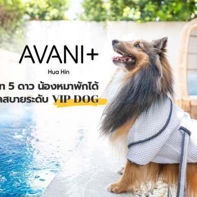 รีวิว Avani+ Hua Hin Resort พูลวิลล่าส่วนตัวสุดหรู หนึ่งในรีสอร์ทสุนัขพักได้ที่ดีที่สุดในไทยจากเชนจ์ Minor 34 - Avani